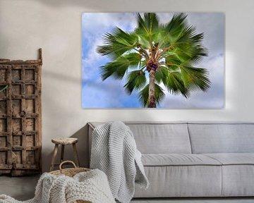 Blick auf eine traumhafte Palme auf den Seychellen  vor einem blauen Himmel mit kleinen Wolken von MPfoto71