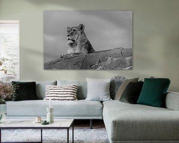 Löwin auf der Lauer. von Michel Swijgman