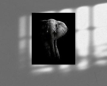 Olifant!, WildPhotoArt  van 1x