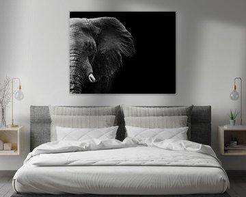 Olifant, WildPhotoArt  van 1x