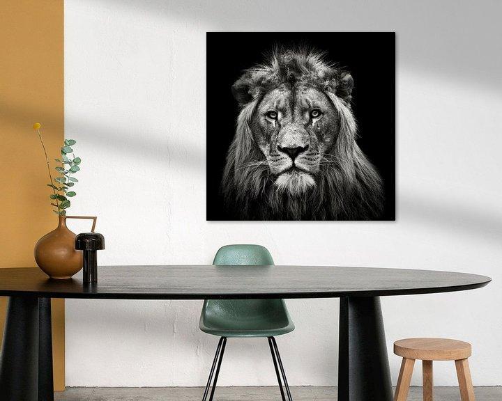 Beispiel: Young Male Lion, Christian Meermann von 1x