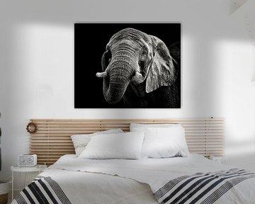 Afrikanischer Elefant, Christian Meermann von 1x