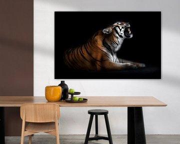 Tiger Portrait, Santiago Pascual Buye von 1x