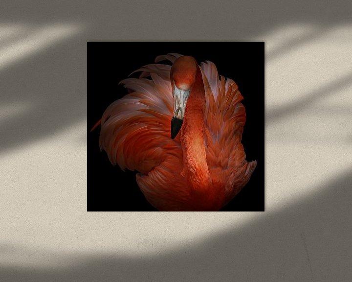 Beispiel: rosa Schönheit, KaMerA  von 1x