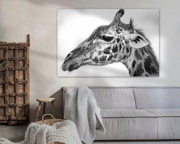 Maasai Giraffe, Jeffrey C. Sink von 1x