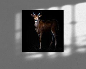 Junge Elenantilope Portrait, Santiago Pascual Buye von 1x