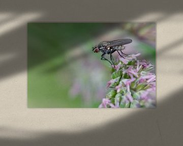 Fliege auf einer Blume von Petra Vastenburg