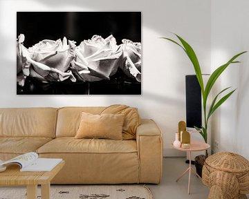 Roses are.... von Ruud van Ravenswaaij