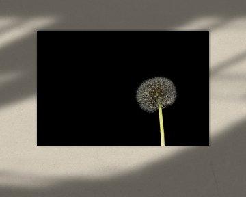 Die Sonnenblume von Merel Visser