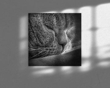 Schlafende Katze von Jefra Creations
