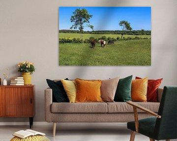 Paarden die grazen op een groene weide tegen een blauwe lucht van MPfoto71