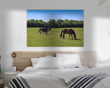 Drei Pferde grasen auf einer grünen Wiese vor blauem Himmel von MPfoto71