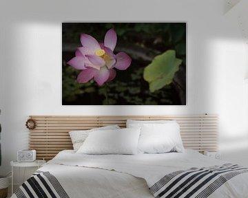 Tirta Gangga, Karangasem, Bali, Indonesien - 24. Dezember 2019 : Eine wunderschön blühende rosa Lotu von Anges van der Logt