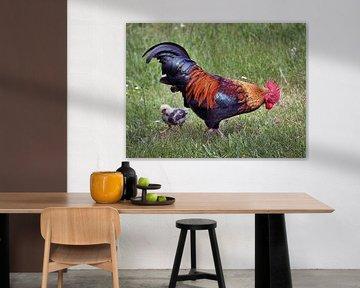 De haan en t kippetje / The Rooster and the chick von Harrie Muis