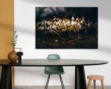 Sneeuwklokjes in een speciaal kleurontwerp van Fotos by Jan Wehnert