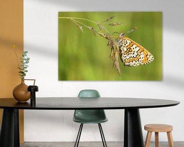 De veldparelmoervlinder van peter reinders
