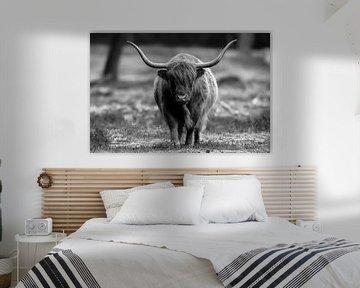 Schotse hooglander zwart/wit van Dennis Bresser