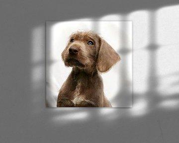 Puppy Look van Mogi Hondenfotografie