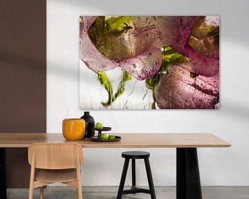 Glockenblume in Eis 1 von Marc Heiligenstein