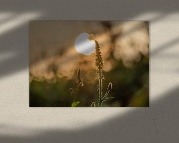 Sommer-Wildwuchs von Tania Perneel