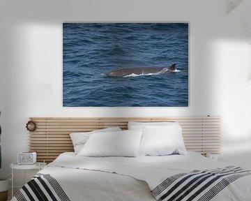 Butskop walvis van Merijn Loch