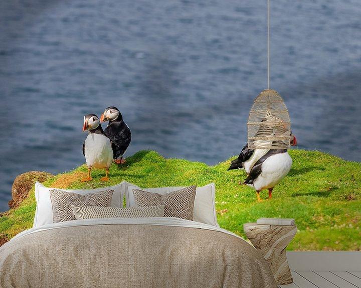 Beispiel fototapete: Papageientaucher von Merijn Loch