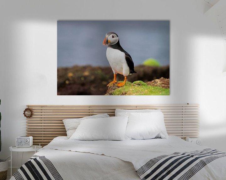 Beispiel: Papageientaucher von Merijn Loch