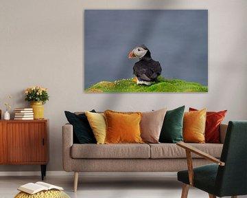 Papageientaucher von Merijn Loch