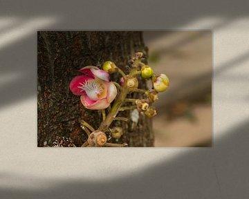 Prachtige bloem in Thailand 2 van Mirjam Welleweerd