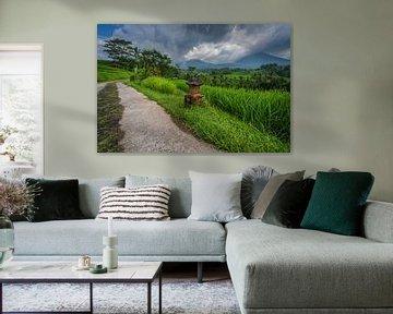 Kleine zandweg door de rijstvelden van Jatiluwih op Bali, Indonesie van Anges van der Logt