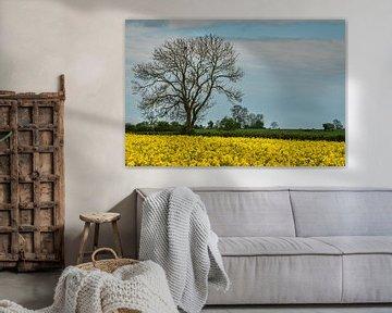 Champ de colza avec un grand arbre en Angleterre sur Anges van der Logt
