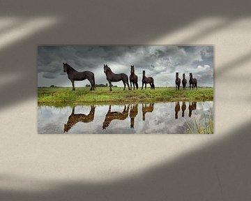 Junge Friesenpferde in Lemmer von Frans Lemmens