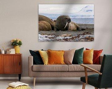 Walross von Merijn Loch