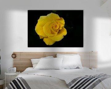 Gelbe Rose vor dunklem Hintergrund von Ulrike Leone