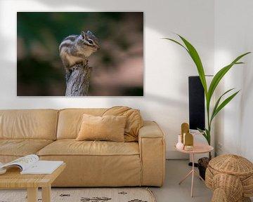Siberische grondeekhoorn bovenop tak