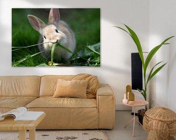 Schattig konijntje eet gras van cuhle-fotos