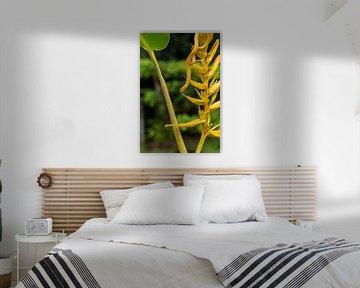 Yellow eyelash palm pitviper van Mirjam Welleweerd