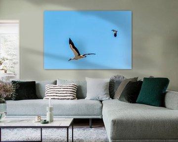 Storch im Flug gegen blauen Himmel von Frank Ketelaar
