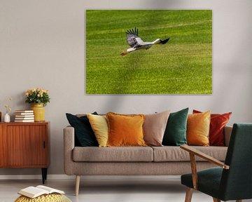 Storch auf der Weide von Frank Ketelaar