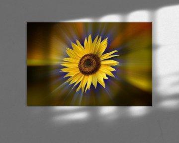 Sonnenblume vor einem farbenfrohen abstrakten Hintergrund von Harry Adam