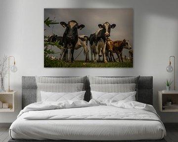 Nieuwsgierige koeien van Wolbert Erich