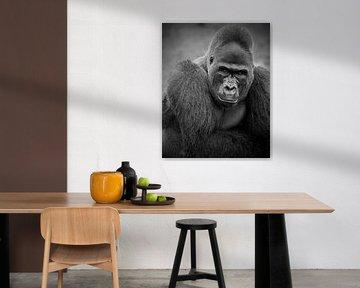 Silberrücken-Gorilla-Mann von Patrick van Bakkum