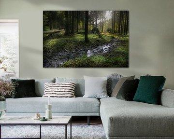 Beekje in het bos van Dieter Beselt