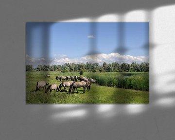 Groep wilde paarden in de Oostvaardersplassen in Flevoland van Sjoerd van der Wal