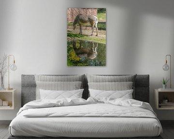 Zebra spiegelt sich im Wasser von didier de borle