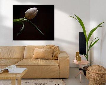 Stilleben Tulpe von 2daysnature