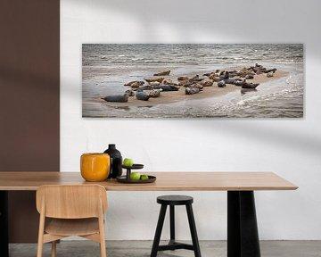 Zeehonden rusten uit op een zandbank van Frans Lemmens