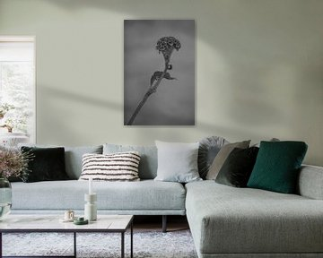 Celosia schwarz-weiß von Carla Van Iersel