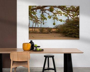 Baobab boom van Audrey Nijhof