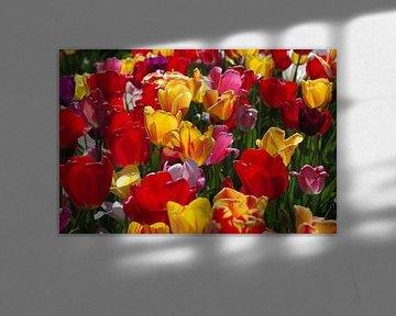 Buntes Tulpenfeld von cuhle-fotos